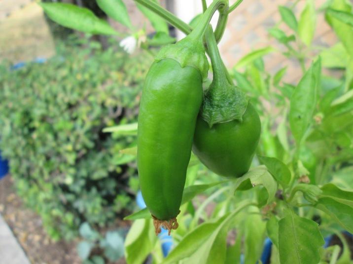 Italian sweet peppers.
