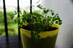 parsley-476872_1280